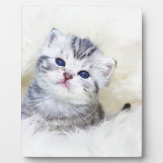 Three weeks old young cat sitting on sheep fur plaque