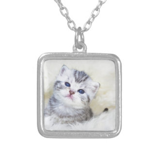 Three weeks old young cat sitting on sheep fur silver plated necklace