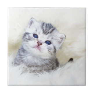 Three weeks old young cat sitting on sheep fur small square tile
