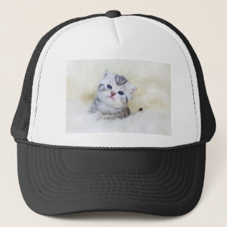 Three weeks old young cat sitting on sheep fur trucker hat