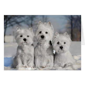 Three Westies in the Snow Greeting Card