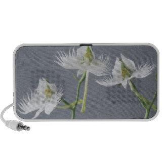 Three White Egret Orchids Travel Speaker