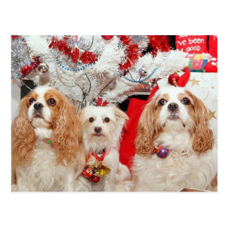 Three Wise Doggies Christmas Post Cards