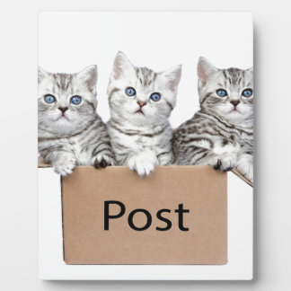 Three young cats in cardboard box on white photo plaque