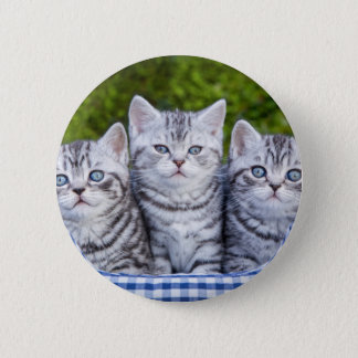 Three young silver tabby cats in checkered basket 6 cm round badge
