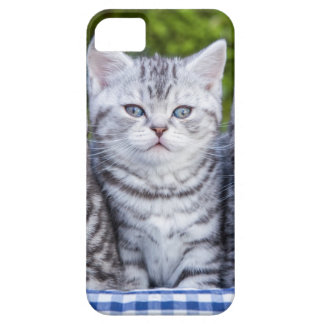 Three young silver tabby cats in checkered basket barely there iPhone 5 case