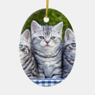 Three young silver tabby cats in checkered basket ceramic ornament