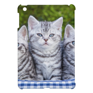 Three young silver tabby cats in checkered basket cover for the iPad mini