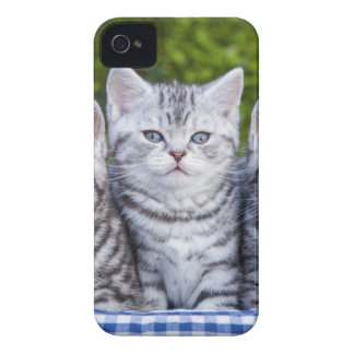 Three young silver tabby cats in checkered basket iPhone 4 cover