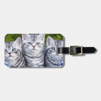 Three young silver tabby cats in checkered basket luggage tag