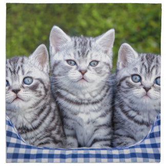 Three young silver tabby cats in checkered basket napkin