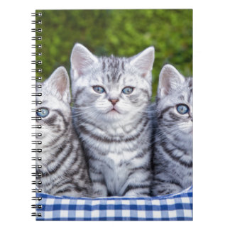Three young silver tabby cats in checkered basket notebook