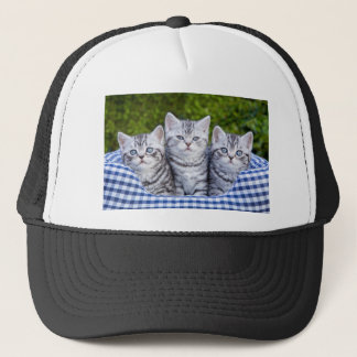 Three young silver tabby cats in checkered basket trucker hat