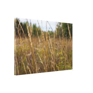 Through The Grass Tops Canvas Print