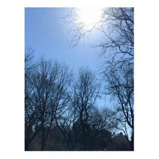 Through the Trees Riverside Park New York City Sun Postcard