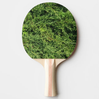 Thuja tree photo background ping pong paddle