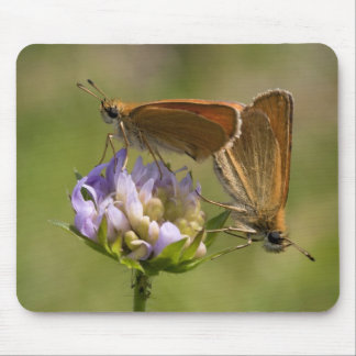 Thymelicus lineola mouse pad
