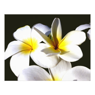 ti plant flowers yellow white black back.jpg personalized flyer