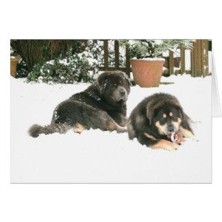 Tibetan Mastiff Caspar & Jampo Card