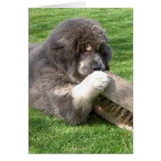 Tibetan Mastiff Jampo with broom Card