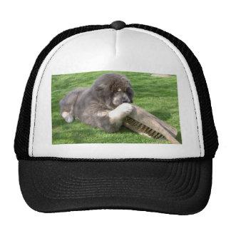Tibetan Mastiff Jampo with broom Trucker Hat