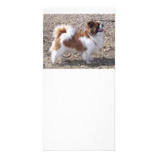 Tibetan Spaniel full Photo Cards