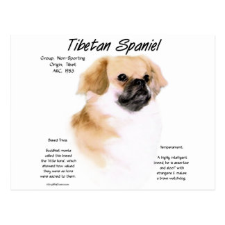 Tibetan Spaniel History Design Postcard