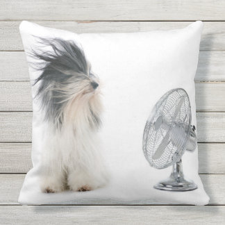 Tibetan terrier and his fan outdoor cushion
