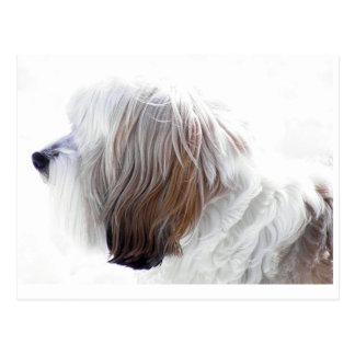 Tibetan Terrier Postcard