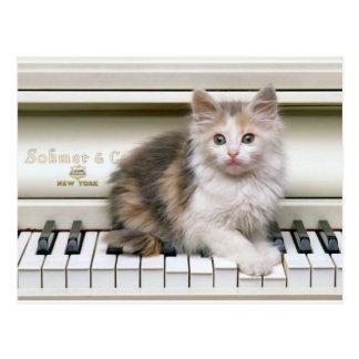 Tickling The Ivorys Kitten Postcard