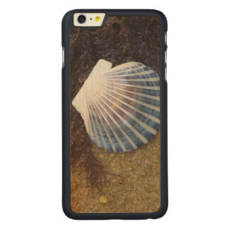 Tidal Pool Carved® Maple iPhone 6 Plus Case