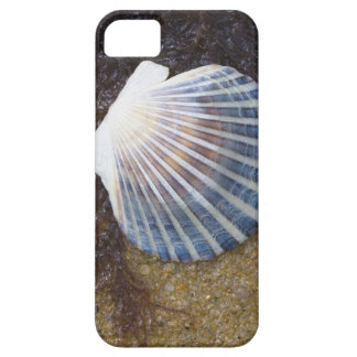 Tidal Pool iPhone 5 Cases