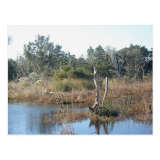 Tidal Wetland Buxton NC OBX Postcard