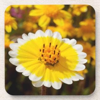 Tidy Tip Wildflowers Coaster