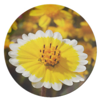 Tidy Tip Wildflowers Dinner Plates