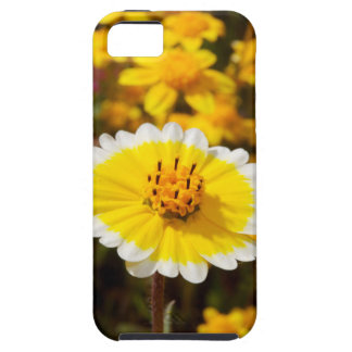 Tidy Tip Wildflowers iPhone 5 Cover