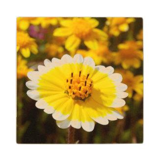 Tidy Tip Wildflowers Maple Wood Coaster