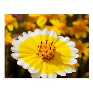 Tidy Tip Wildflowers Postcard