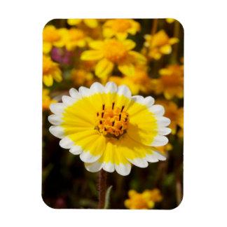 Tidy Tip Wildflowers Rectangular Photo Magnet