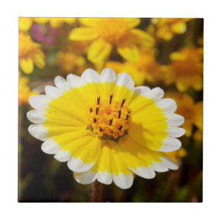 Tidy Tip Wildflowers Small Square Tile