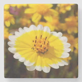 Tidy Tip Wildflowers Stone Beverage Coaster