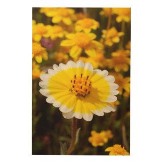 Tidy Tip Wildflowers Wood Print