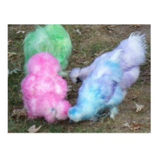 Tie Dyed Silkie Chickens in Pastel Easter Colors Postcard
