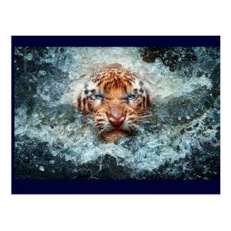 Tigar Swiming Postcard