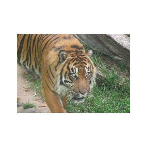 Tiger 008 Canvas Stretched Canvas Prints
