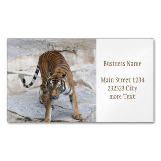 Tiger 1216 AJ Magnetic Business Card