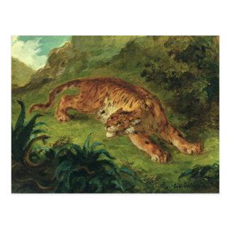 Tiger and Snake, 1858 Postcard