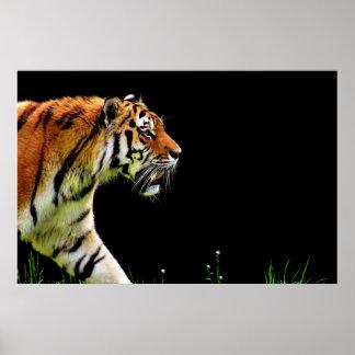 Tiger Approaching - Wild Animal Artwork Poster