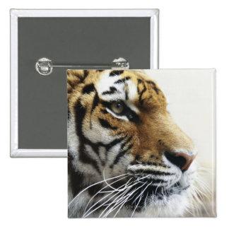 Tiger. Asahiyama Zoo, Hokkaido, Japan 15 Cm Square Badge