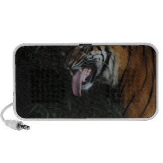 Tiger at the Zoo iPhone Speaker